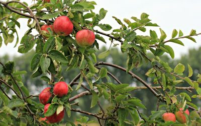 Best U-Pick Fruit Farms Near Telford, PA